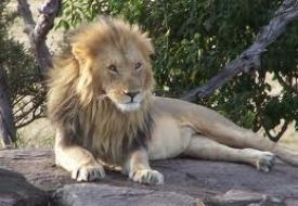 The Big Cat Safari-Nairobi-