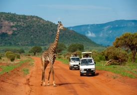 AB 106: Tsavo East and West – 2 days Safari