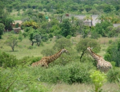 AA 46: Tsavo West National Park – 3 days Safari