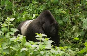 Best of Uganda Wildlife Tours